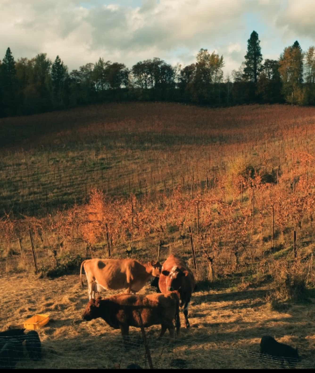 Hiyu Wine Farm, Oregon